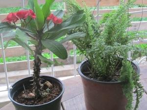 Denbigh = new plants!